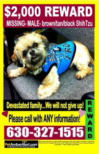 poster to help find lost dog Phil the shih-tzu in Chicago