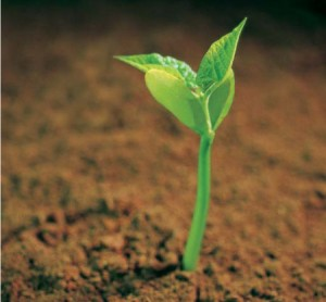 photo of a small sprout growing in dirt