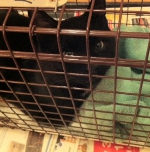 outdoor cat in humane trap